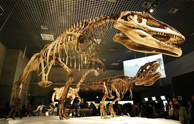Dinosaur's Fossil Replicate for the Museum
