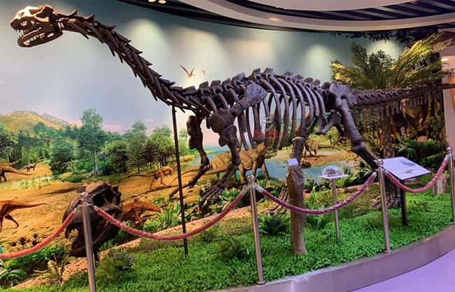 Dinosaur Fossil Replicate