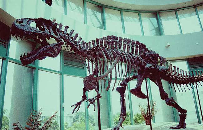 Fiberglass Revivification Dinosaurs Fossils Replicas for Museum