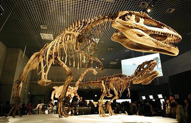 Fossils Replicas
