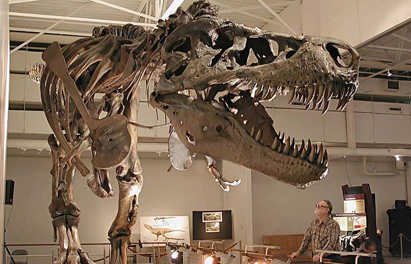Real Life Size Fiberglass Dinosaur Replicate
