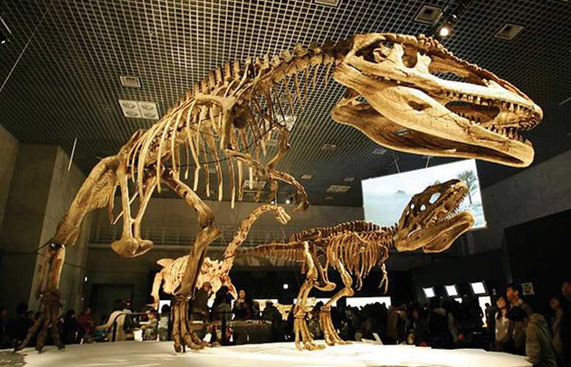 good quality dinosaur's fossil replicate for museum
