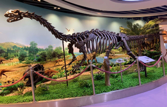 New Museum Product: 8M Long dinosaur Fossil Replicate
