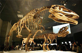 Learn about Ancient Dinosaurs through Fossils
