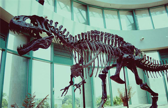 A Full-Scale Dinosaurs Fossils Replicas Displayed in the American Museum of Natural History